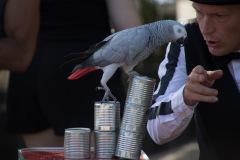 Parrot-show-Kasper-Jensen-2020-21