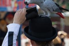Parrot-show-Kasper-Jensen-2020-25