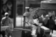 Parrot-show-Kasper-Jensen-2020-27