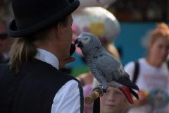 Parrot-show-Kasper-Jensen-2020-28