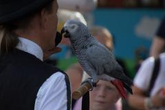 Parrot-show-Kasper-Jensen-2020-29