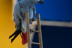 Parrot-show-Kasper-Jensen-2020-33