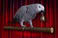 Parrot-show-Kasper-Jensen-2020-43