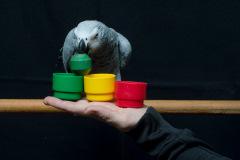 Parrot-show-Kasper-Jensen-2020-44