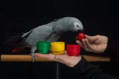 Parrot-show-Kasper-Jensen-2020-46