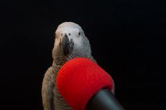 Parrot-show-Kasper-Jensen-2020-47
