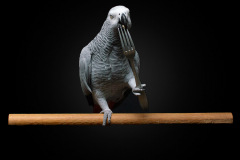 Parrot-show-Kasper-Jensen-2020-48