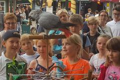 Parrot-show-Kasper-Jensen-2020-52