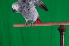 Parrot-show-Kasper-Jensen-2020-76