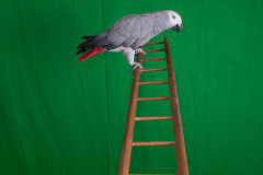 Parrot-show-Kasper-Jensen-2020-78