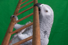Parrot-show-Kasper-Jensen-2020-79