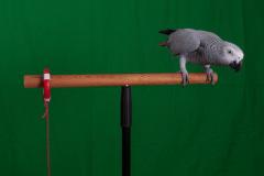 Parrot-show-Kasper-Jensen-2020-82