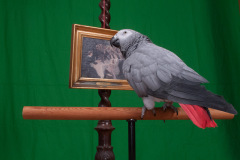 Parrot-show-Kasper-Jensen-2020-84