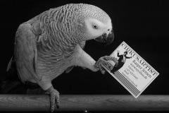 Parrot-show-Kasper-Jensen-2020-96