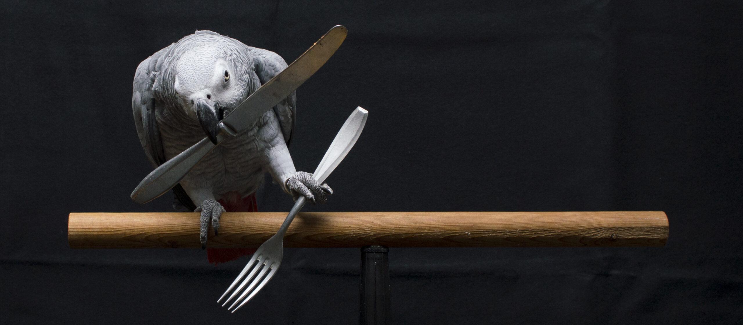 Parrot show 3