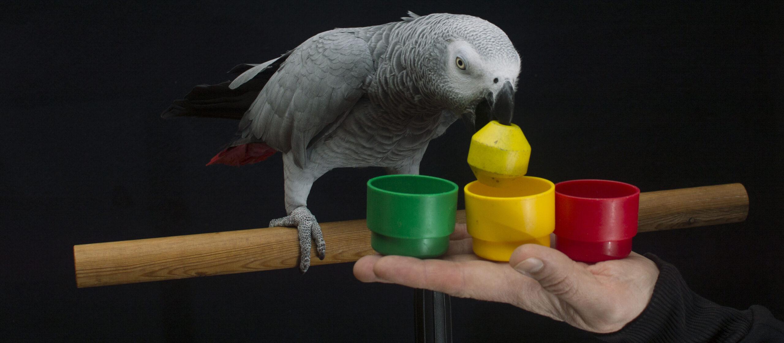 Parrot show 2