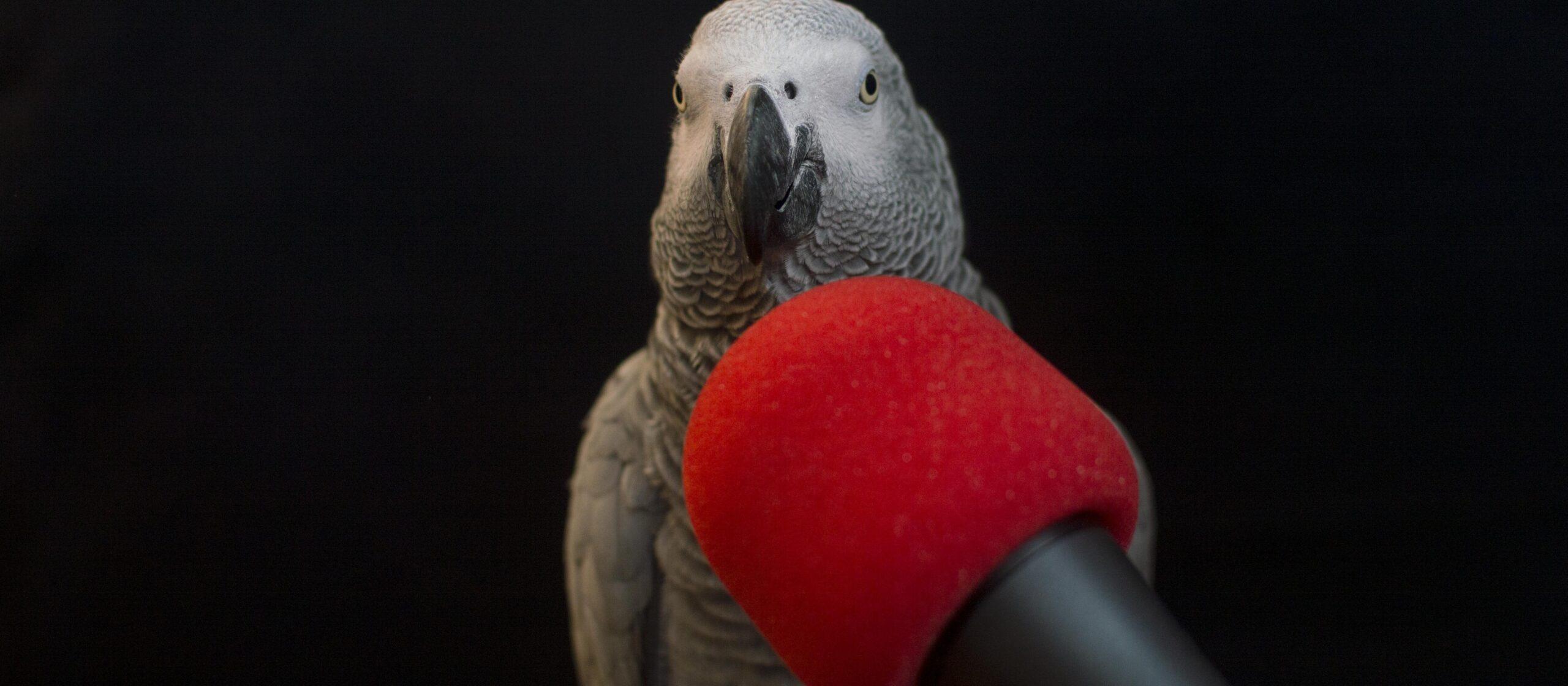 Parrot show 4