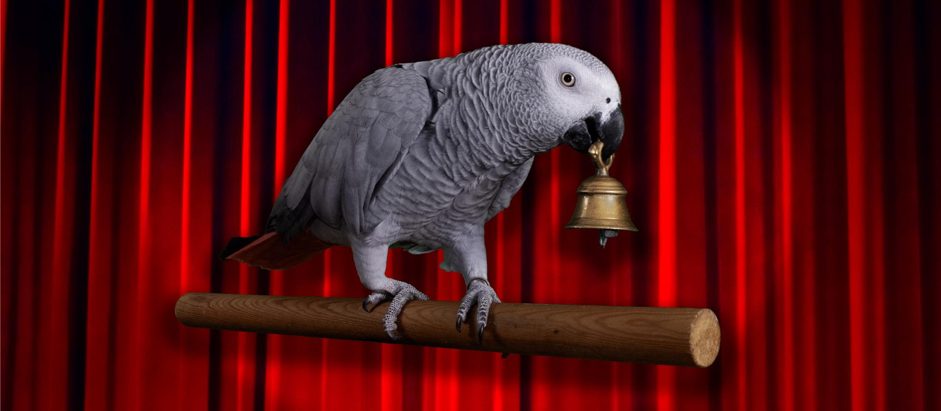 Parrot show 1